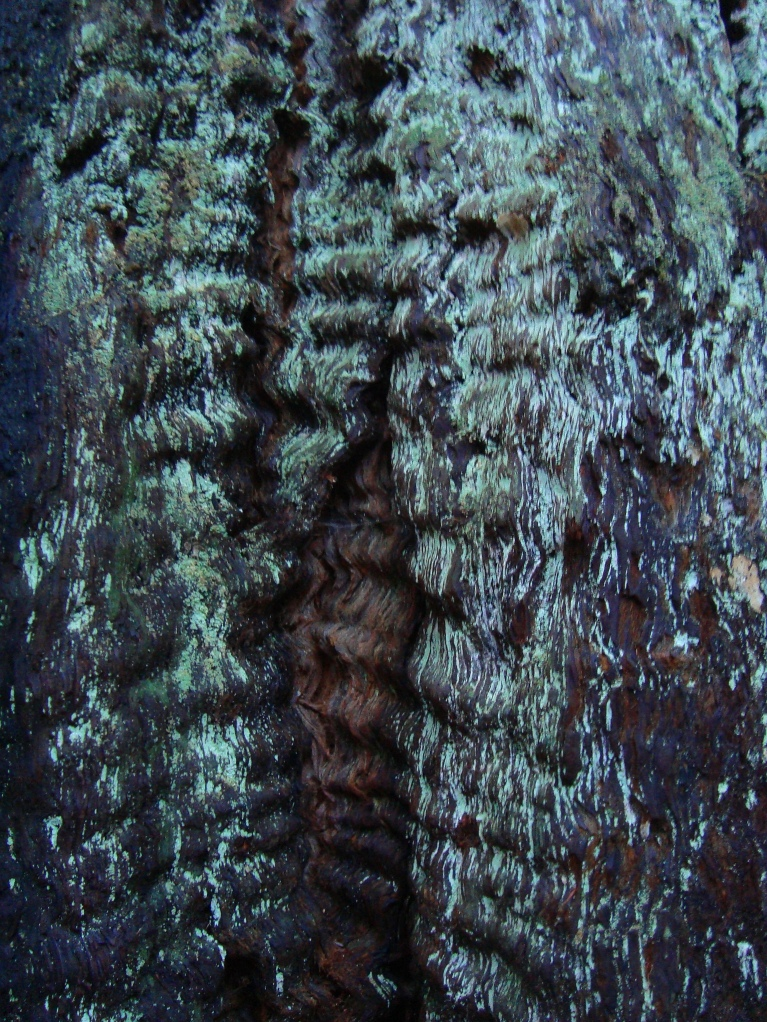 bark_old_redwood_JVengua